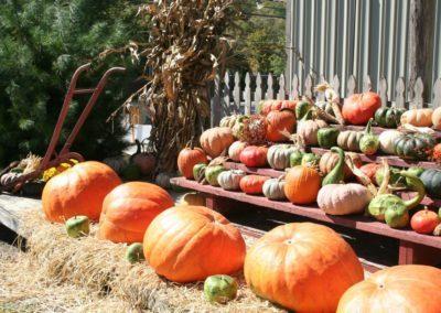 clemmons-pumpkins